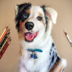 Lápices de Color Artísticos Prismacolor Premier Retrato Perrito